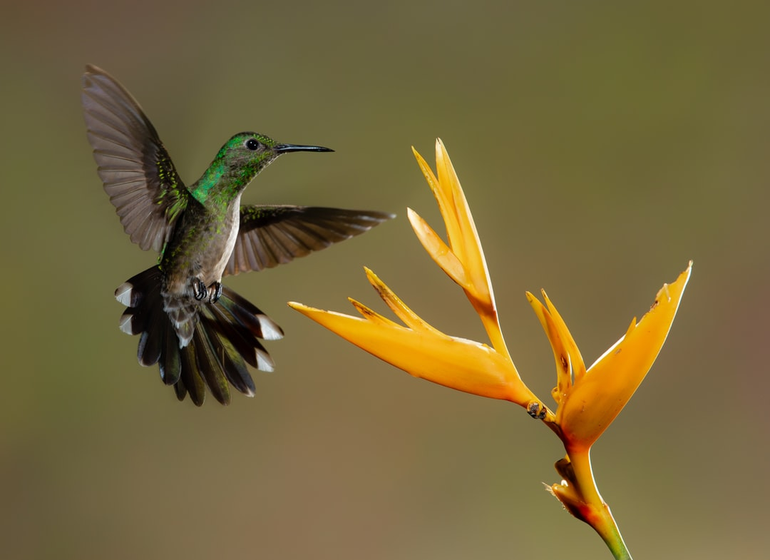 A hummingbird flying in the sky
